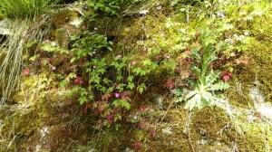 Die Mauern des Burghügels sind echte Biotope