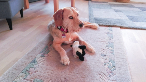 Hund mit skeptischem Blick